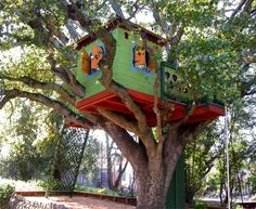 Tree house in funky colors