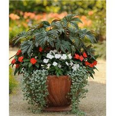 Grypho Begonia, Silver Falls Dichondra, Celebration Orange New Guinea Impatiens, Celebrette Frost New Guinea Impatiens.