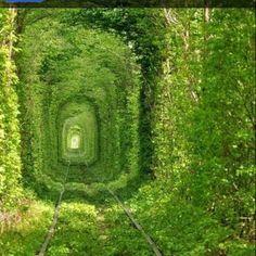 Tunnel of love, somewhere in Ukraine...
