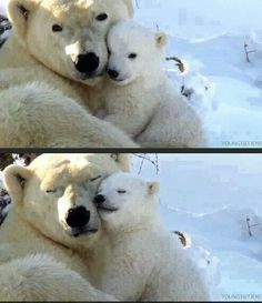 """I love you, mummy."" ""I love you too, little Snowball"""