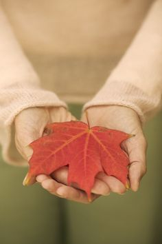 Preserving beautiful Fall Colored Leaves tutorial