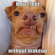 mascara, funny dogs, makeup board, funny pictures, funni, funny dog pictures, puppi, meme, true stories