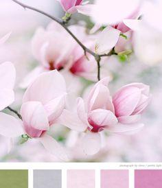 Magnolia color scheme