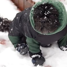 Dog snowsuit with boots more dog snowsuit dogs attach boot boots