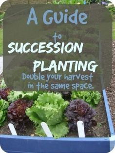 succession planting garden plan from homestead