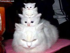funny cat pics - Bing Images