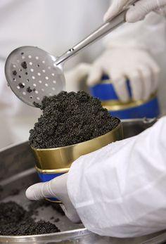 www.kaviaarkoning.nl  caviar