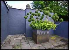 Tony Ridlers Garden