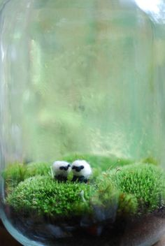 irish landscape with wee wool sheep terrarium  from weegreenspot via etsy