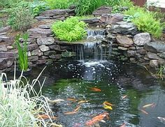 This is how I would like my Koi Pond to look
