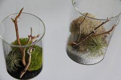 Hanging Tillandsia Terrarium  by ConceptualNature on Etsy, $28.00