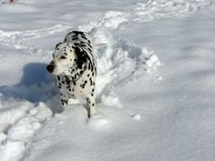 Thank goodness he has spots or we would never find Bailey.