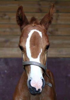 Love ... Equine