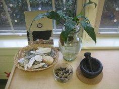 Reggio Inspired Environments herb