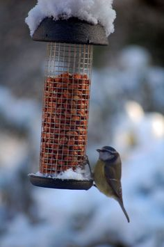 How to feed birds in your winter garden.