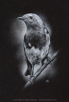 Robin by Crynyd on deviantART