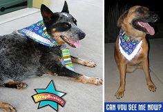 ScrapBusters: Reflective Dog Bandana