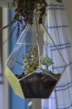 lovely!  I'm so bummed i'm missing terrarium night! @AnnaMarie Bonura @Lauren Fong