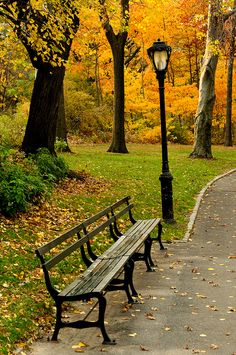 Autumn Bench by Randy Le'Moine Photography Buckets, New York City Central Park, Autumn Leaves, Park Benches, Citi Color, Autumn In City, Beauti, Bucket Lists, York Citi