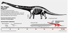 Meet the the Dreadnoughtus: One of largest animals to ever walk the earth  http://on.wsj.com/1qzNK6d  via @WSJGraphics