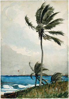A Watercolor by Winslow Homer, Palm Tree, Nassau, 1898