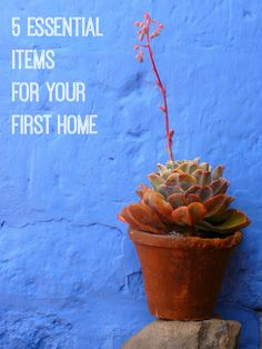 What are the top 5 most essential items for your first home? Check this out and discover the answer.