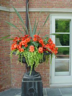 Back Door Container Garden potted plants, orang, planters flowers, front doors, gardens, flower pots, garden idea, front porches, container gardening