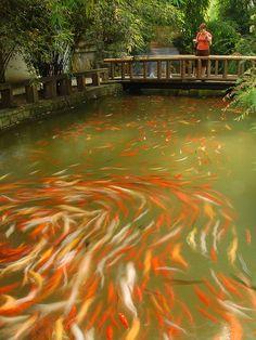 Balik Avi Videolari - http://www.balikavlamavideolari.com/  #Fish