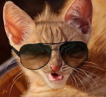 Really COOL Cat !