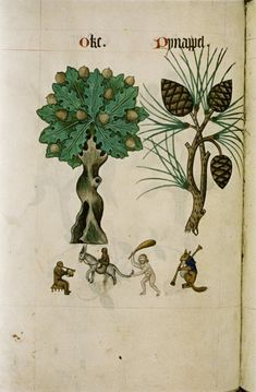 Tudor herbal, 1520