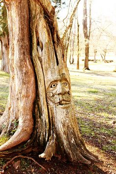 Did you know there is an entire PARK full of these amazing ceder tree carvings?  Orr Park in Montevallo, Alabama is a must visit!  See 30+ carvings by artist Tim Tingle.  Take kids and see how many they can spot!