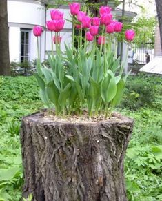 Natural garden pot... I have the PERFECT stump for this!!