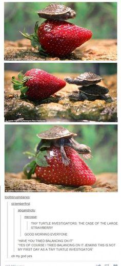 anim, turtle eating strawberry, funni, jenkin, turtles, ador, tiny turtle, tini turtl, thing