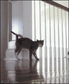 ....OH! You Scared me.....Bounce bounce bounce run!