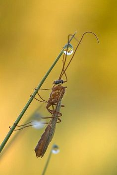 Macrofotografía de Insectos  arte  insectos  fotos
