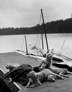 Sailboat and Dogs By Bruce Weber