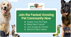 "Become a Member FREE and you will have a chance to win!  • Join ""YouPet,"" the internet's first social network for pets, and create a profile for your four-legged friend. You'll also be able to play games, meet other pet owners, and be entered to win a $100 Petco gift card every week. If you're a pet owner there is no better place for you than ""YouPet."""