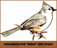 Resources for Bird Unit Study #homeschool | thissweetlifeofmine.com  @Tara Harmon Harmon Mitchell