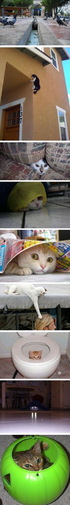 Si James Bond fuera gato..