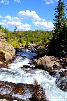 Glacier River in Yellowstone National Park, Wyoming United States