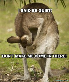 funny animals, laugh, mother, funny pictures, kangaroos