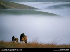 A horse and foal stand out against the gray of the English moors