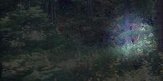 Train passenger captures Bigfoot lurking in woods near Idaho amusement park   Posted on Roadtrippers.com!