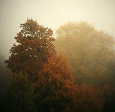 Film Photo By: Nikolay Popov  Hazy Autumn Seagull 4A-103, Kodak Portra 400NC