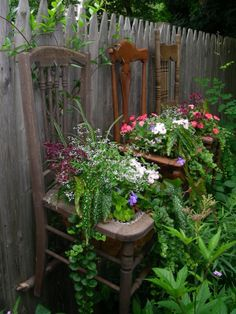 A row of old chairs...hanging on the picket fence...stuffed with blooming plants.