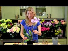 DIY video: Dress up your orchids! Orchids are a great buy because they are beautiful, long-lasting, and always an elegant choice. They already look nice when ya get them, but it's fun to dress em' up a little bit! // sarah von pollaro