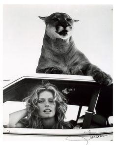 cougar & Farrah Fawcett