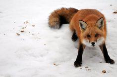 snow tumblr_md9502WOyJ1r5h04to1_500.jpg (500×332)