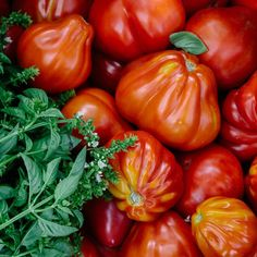 how to grow your Best Ever tomatoes