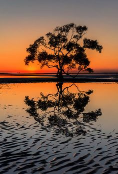 Nudgee Beach, Queensland, Australia by Aaron  Bishop...wow!God on earth everywhere. Here is the Tree of Life.